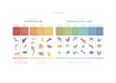 Poster-Biologi-Djurrikets-klassificering-Kunskapat