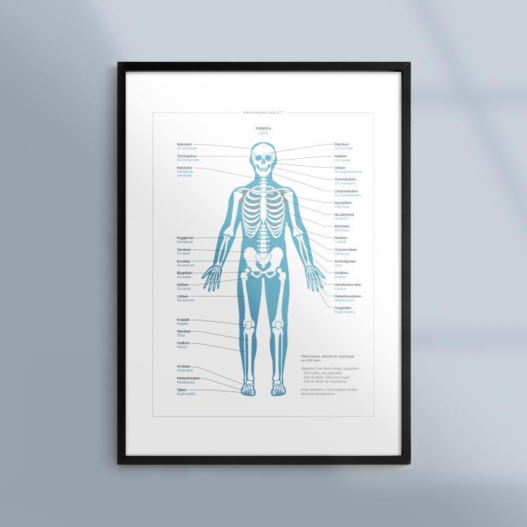 Poster-Tavla-Anatomi-Manniskan-Skelett-Ram-Kunskapat