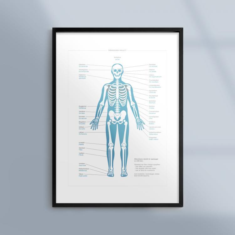 En tavla med ram med människans skelett