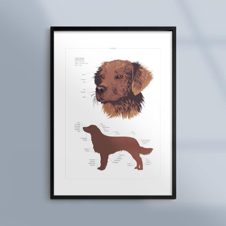 Poster-Tavla-Hund-Husdjur-Ram-Kunskapat