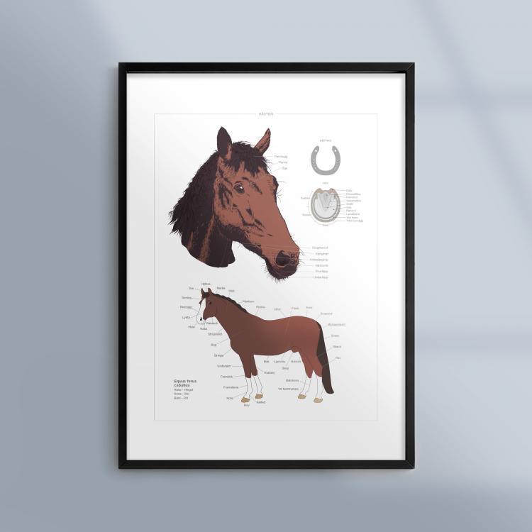 Poster-Tavla-Hast-Husdjur-Bondgard-Ram-Kunskapat