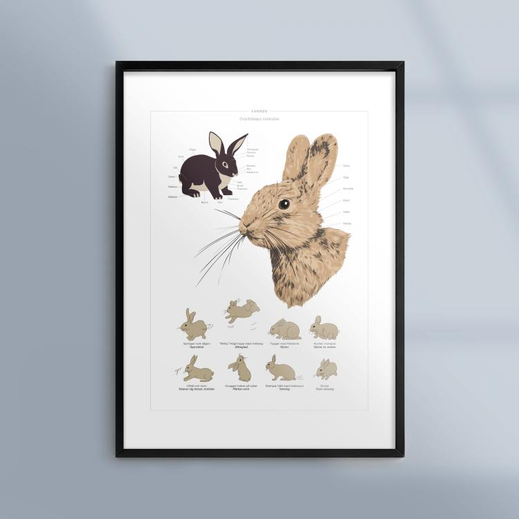 Poster-Tavla-Kanin-Husdjur-Ram-Kunskapat