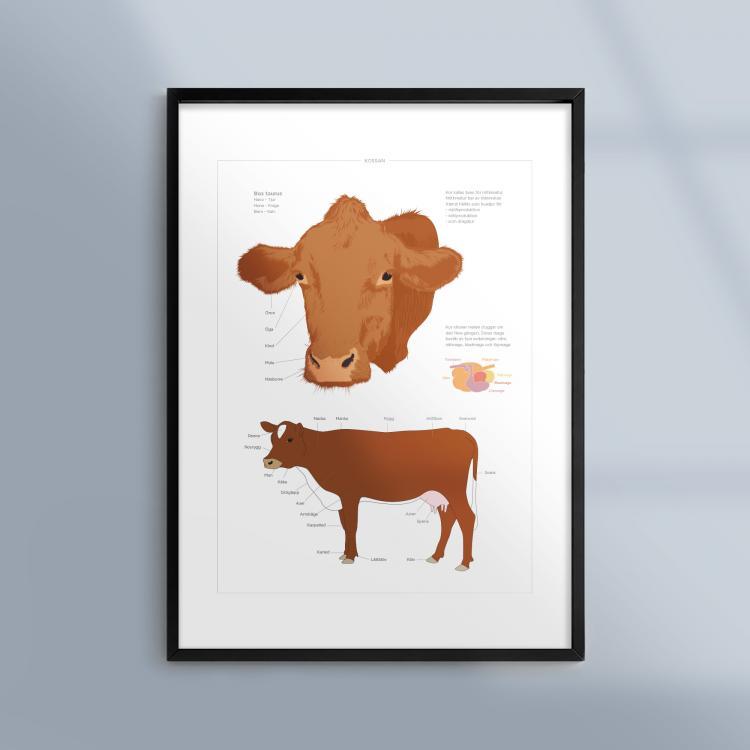 Poster-Tavla-Ko-Husdjur-Bondgard-Ram-Kunskapat