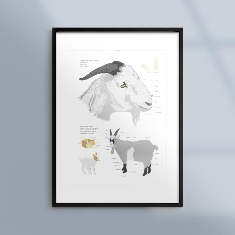 Poster-Tavla-Get-Getter-Djur-Bondgard-Ram-Kunskapat