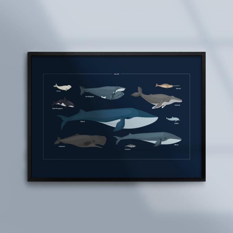 Poster-Tavla-Valar-Havet-Ram-Kunskapat