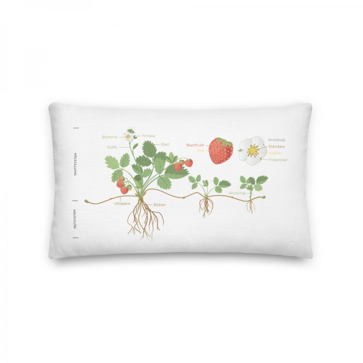 Kudde-jordgubbe-planta-vaxt-Kunskapat