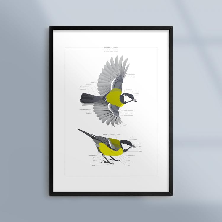 Poster-Tavla-Fageltopografi-Fagel-Talgoxe-Ram-Kunskapat